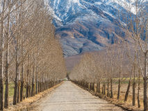 Дерев-выровнянная майна под белыми горами Стоковые Фото