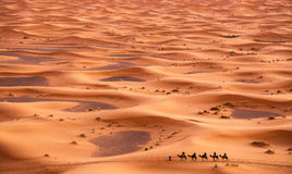 骆驼有蓬卡车在撒哈拉大沙漠 库存图片