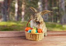 复活节兔子坐与室外的篮子 免版税库存图片