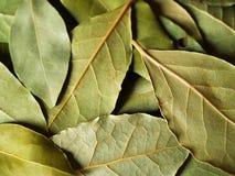 宏观海湾干燥的叶子 库存图片