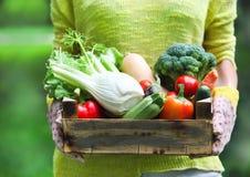 与新鲜蔬菜的妇女佩带的手套 免版税图库摄影