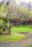 庭院和游泳池的好的看法 免版税库存照片