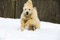 在雪的小狗 免版税库存照片