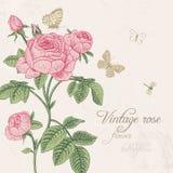 与开花的桃红色玫瑰的葡萄酒卡片 免版税库存照片