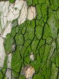 Πράσινη σύσταση φλοιών δέντρων Στοκ Φωτογραφίες