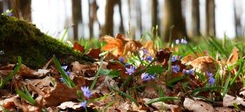 春天森林花 库存照片