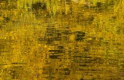Озеро в осени с отражением листьев осени Стоковая Фотография