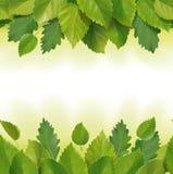 叶子(桦树,橡木)的构成 库存照片
