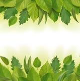 叶子(桦树、橡木,玉树)的构成 库存图片