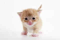 γατάκι Στοκ φωτογραφίες με δικαίωμα ελεύθερης χρήσης