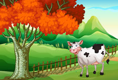 在大树附近的一头微笑的母牛 免版税库存图片