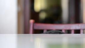 猫 影视素材