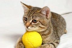 Шаловливый котенок. Стоковые Изображения RF