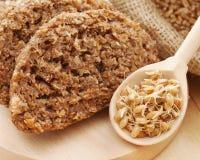 从麦子新芽和发芽的种子的面包 库存图片