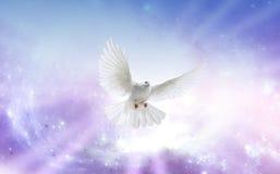 Голубь святого духа Стоковое фото RF