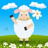 复活节逗人喜爱的羊羔在草甸 免版税库存图片