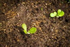 植物起点  免版税库存照片