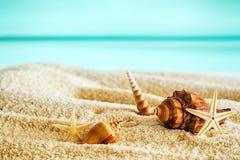 与贝壳的美丽的热带海滩 库存图片