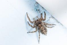 Αράχνη σπιτιών Στοκ εικόνα με δικαίωμα ελεύθερης χρήσης