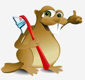 牙齿海狸 免版税库存图片