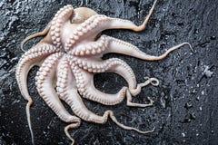 在岩石的新近地被捉住的章鱼 库存图片