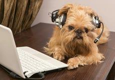 在耳机的狗有话筒的 库存图片