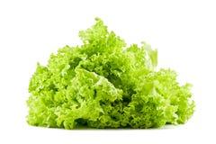 Салат лист Стоковая Фотография