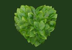 Зеленый цвет выходит в форме сердц, форма сердца, Стоковые Фотографии RF