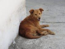 街道狗 库存图片