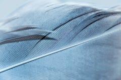 Μακροεντολή φτερών Στοκ Εικόνες