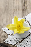 在白色陶瓷罐的唯一黄水仙花 免版税库存图片