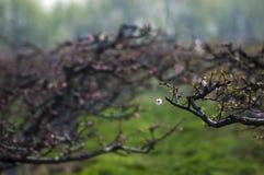 Лес цветка персика Стоковое фото RF