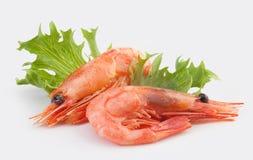 虾 免版税库存照片