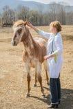 Ветеринарная забота Стоковые Изображения RF