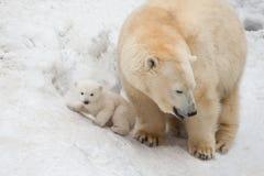 白熊 免版税图库摄影
