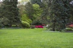 在春雨以后的草坪 库存照片