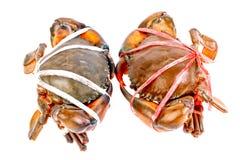 在白色隔绝的黑螃蟹 免版税库存照片