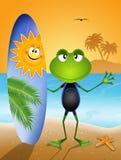 与冲浪者的一只滑稽的青蛙 库存照片
