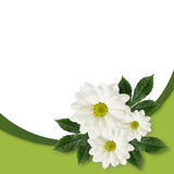 雏菊花的布置 免版税库存图片