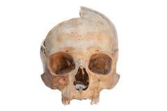 人力查出的实际头骨 免版税库存照片