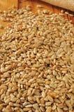Шелушат семена подсолнуха Стоковое Фото