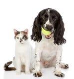狗和猫。看照相机 免版税库存图片