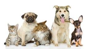小组猫和狗在前面。 免版税库存照片