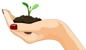 生长植物在手中 库存图片