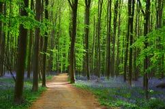 Древесины весны Стоковая Фотография RF