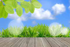 Έννοια οικολογίας, φρέσκοι πράσινοι τομέας και μπλε ουρανός Στοκ Εικόνες