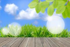 Концепция экологичности, свежее зеленое поле и голубое небо Стоковая Фотография RF