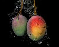 与水飞溅的芒果 库存图片