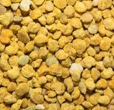 新鲜的花粉 免版税库存图片