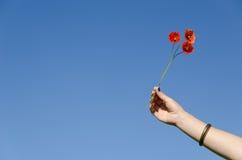 妇女手举行鸦片花在蓝天开花 库存照片